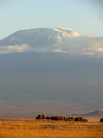 Elephants in the shadow of Mt. Kilimanjaro.