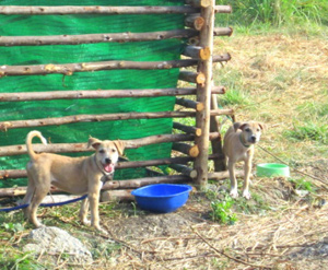 Dogs easily squeeze between pens or dig themselves out.