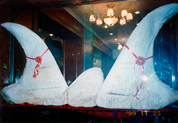 Shark fins on display in a Chinese restaurant. c. IFAW