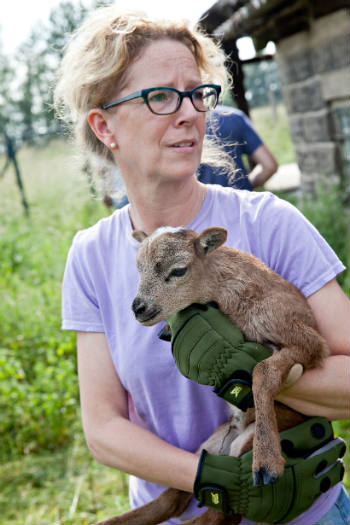 Susanne in our Germany office holding a goat rescued during the recent flooding