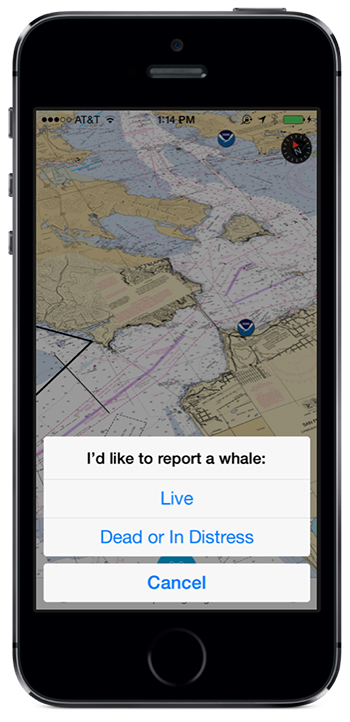 Optimized for iOS8 for iPhone and iPad - Whale Alert is a free app.
