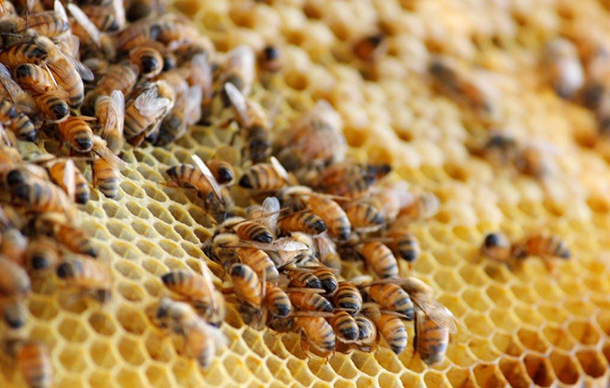 There are half as many beekeepers as there were two decades ago, and the remaining beekeepers are mostly large-scale pollination services with thousands of hives and millions of bees.