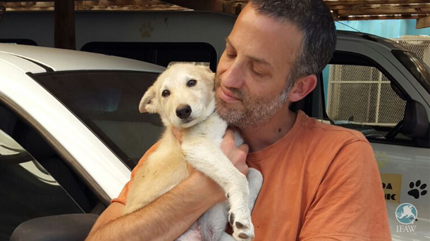 Mary: van gewonde, in de steek gelaten puppy naar geliefd gezinslid.
