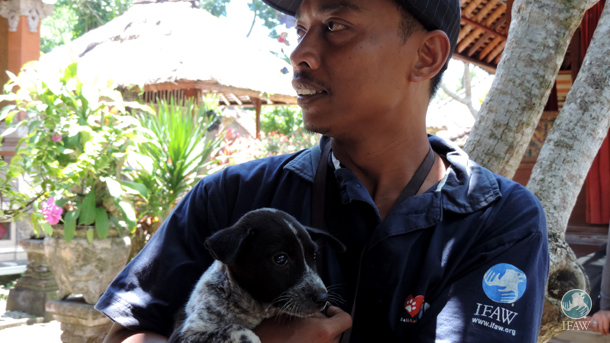 IFAW is proud to partner with the Bali Animal Welfare Association (BAWA) to inspire communities to take responsibility for providing better care to dogs and cats.
