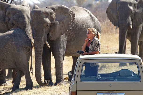 Sharon Pincott set up her own elephant project, mostly self-funded, and protected elephants in Zimbabwe for more than 13 years.