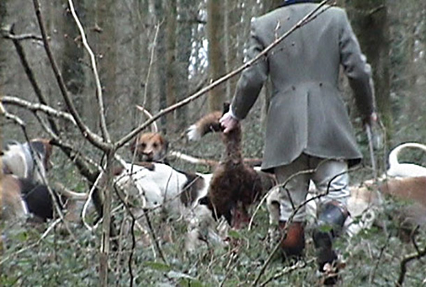 Dead fox handed to the hounds by hunt staff from the Crawley and Horsham Hunt that led to their convictions in 2012. ©Simon Wild