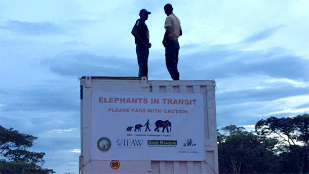 En route, a pit stop to check on the elephants' well-being.
