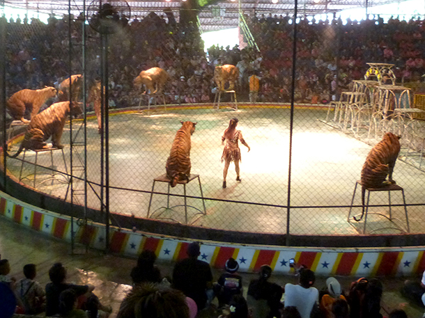 The keeping of wild animals in captivity for the primary purpose of entertainment is not ethically justifiable.