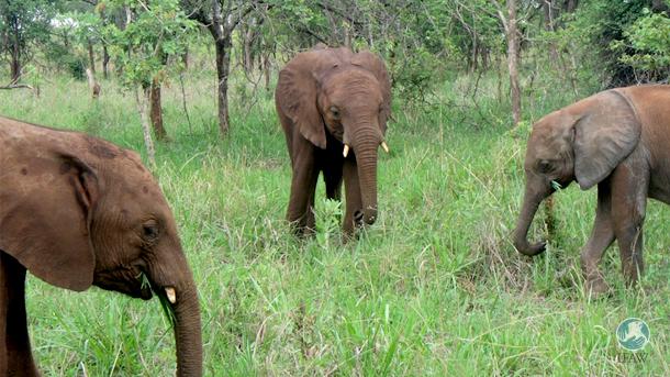 De gauche à droite : Nkala, Musolole, Muchi