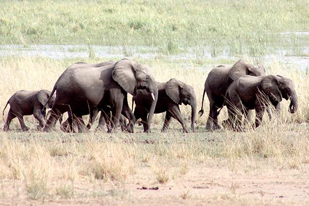 Natuurparken in Malawi worden vaak omschreven als 'eilanden van wildernis in een zee van mensen'.