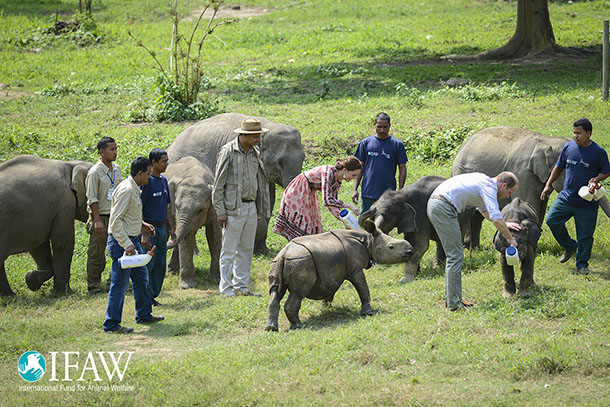 The Duke and Dutchess help with feeding orphaned elephants and baby rhinos
