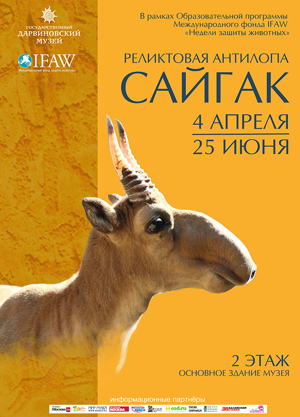 """Saiga: Fossil Antelope"" at the State Darwin Museum from April 4 through June 25, 2017, is expected to be visited by more than 60,000 people."