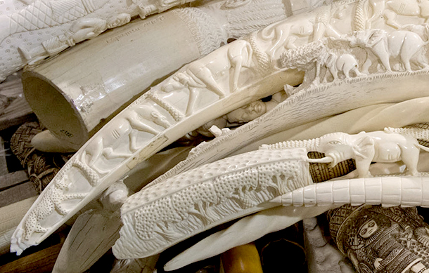 UAE, the first country in the Middle East to destroy its ivory stockpile, is a role model for all neighboring countries.