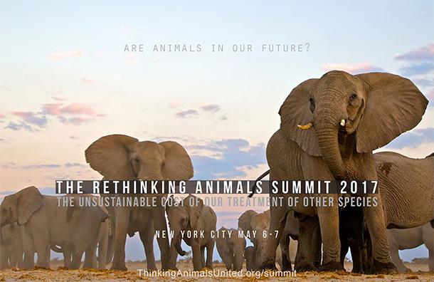 Protéger les éléphants contre les réseaux de braconnage permet de sauver des vies, mais aussi de protéger les hommes.