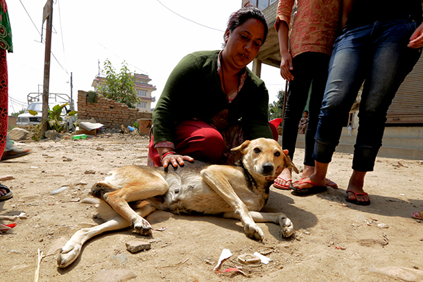 12 days after Nepal's devastating earthquake, the IFAW Animal Rescue team is still encountering animals like Kali that were left crippled, suffering, and in need.