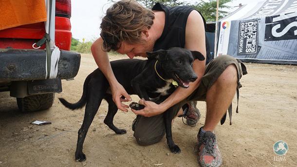 DAD veterinarians are working alongside Accion Animal Ecuador to start vaccination campaigns. PHOTO: © DAD/Lobo Marina