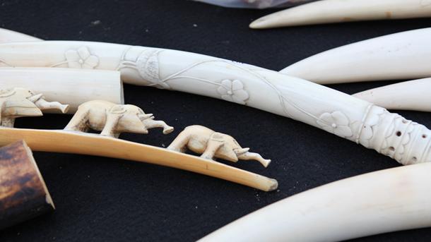 Slagtanden en bewerkt ivoor in Europa
