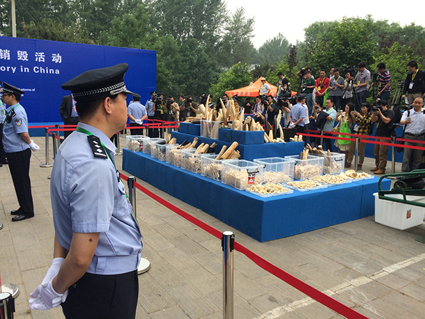 China State Forestry Administration (SFA) and General Administration of Customs (GAC) crushed 662 kg of confiscated ivory