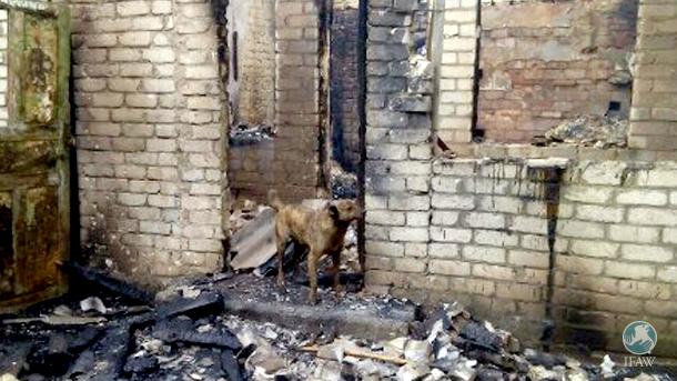 Das Feuer zerstörte unter anderem die kleine Klinik des Tierheims in Gorlovka. Ein Hund starb. Auch die gesamte medizinische Ausstattung wurde zerstört.