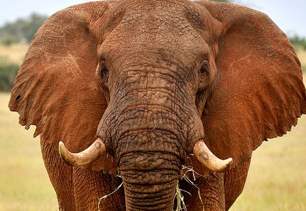 Many States have proposed banning ivory trade by closing loopholes.