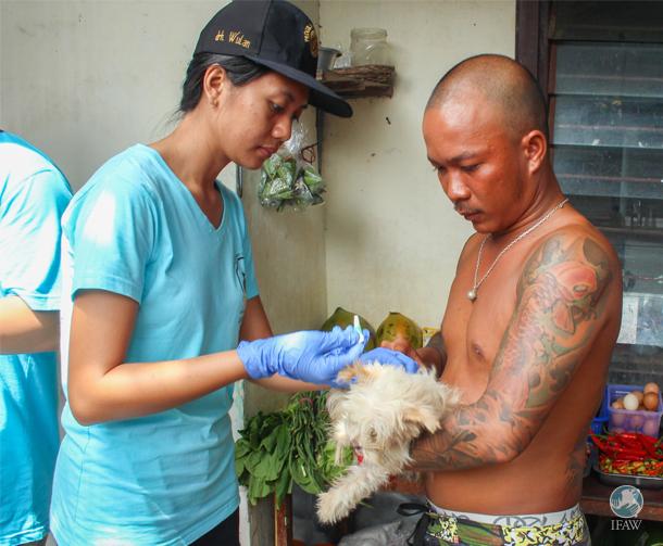 Eine Mitarbeiterin der Fakultät für Tiermedizin der Universität Udayana behandelt einen Hund auf Bali.