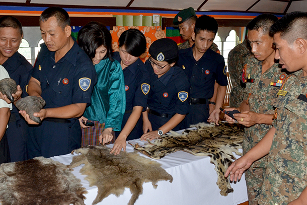 Examination of a variety of wildlife goods