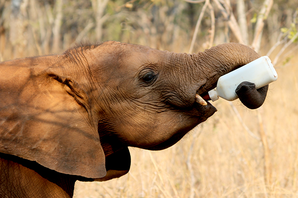 One of the orphans drains her bottle