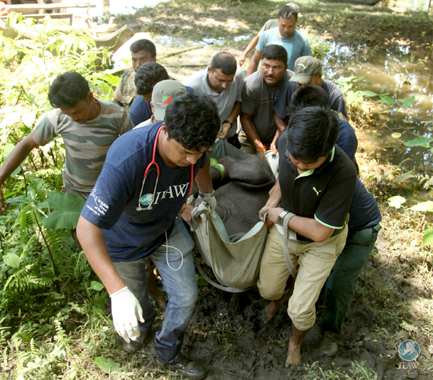 Mobile Veterinary service staff carry the rhino calf up a hill after bringing it from the island to the river's shore.