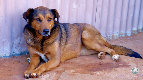 Vaalie, a dearly loved elderly dog who lives in a township in Emnandeni with his owner, was suffering from an unknown malady.