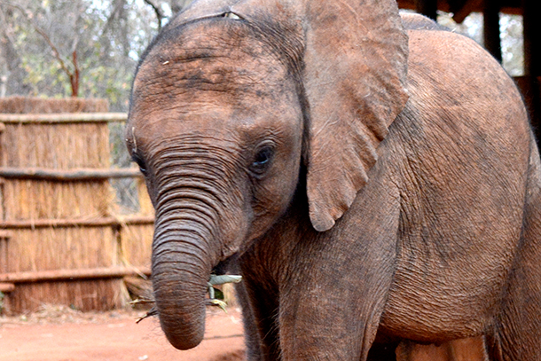 Nearly three years after surgery we knew Suni the elephant would never be able to survive independently