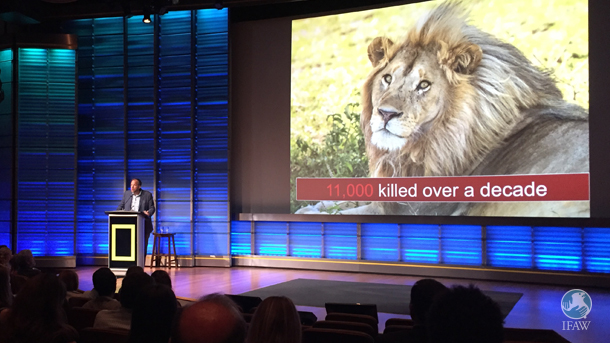 "The author speaks on trophy hunting's effects on lion welfare, pride dynamics and populations at a National Geographic forum today in Washington, DC, titled ""World Lion Day: Trophy Hunting and Lion Conservation."""