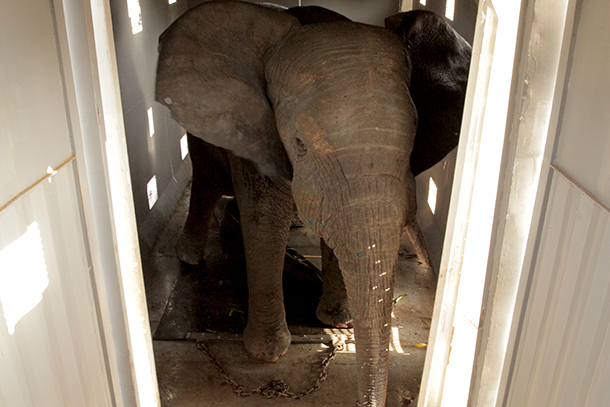 The animals are prodded and clubbed to force them to engage in certain behaviors and punish them for others.