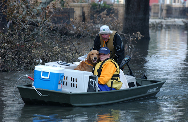 IFAW rescues pets by boat following Katrina disaster.