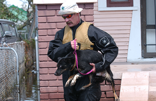 44% of the people who refused to evacuate during Katrina did so because they could not evacuate with their animals.