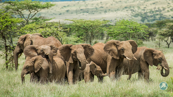 We are following a resolution that encourages governments globally to close their domestic ivory markets.  PHOTO: © IFAW/B. Hollweg