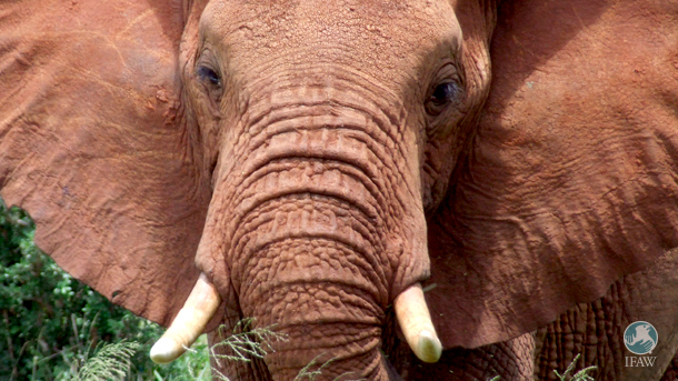 Elephants have reached the tipping point and the next 5 years are critical.