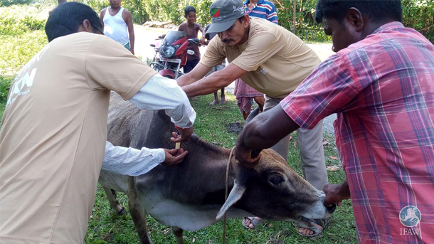 In Chirang, local veterinarians in treated approximately 3,300 animals (mainly cows, buffaloes, goats and pigs) mainly for parasitic infections, malnutrition, diarrhea and fever.