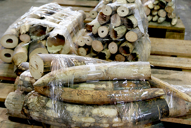 "The Presidents of China and the United States pledged to enact ""nearly complete bans on ivory imports and exports."""