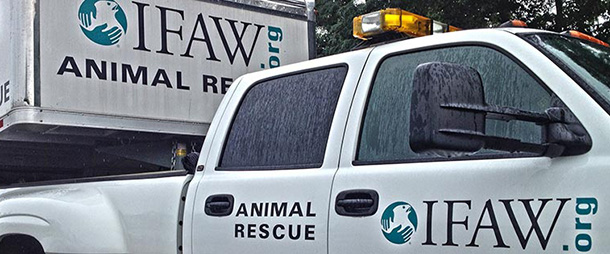 Your IFAW Disaster Response team is on standby to support partners at the local, state and national levels to help animals affected by disasters every day.