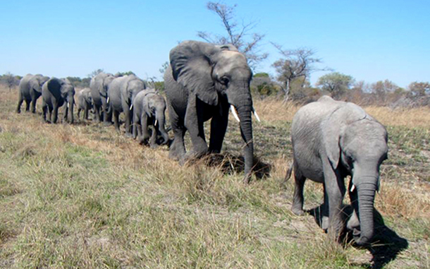Elephants in Kafue National park PHOTO: © Game Rangers