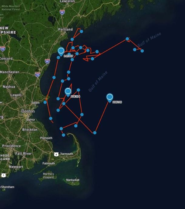 Satellietgegevens laten zien dat de dolfijnen veilig in open water zwemmen.