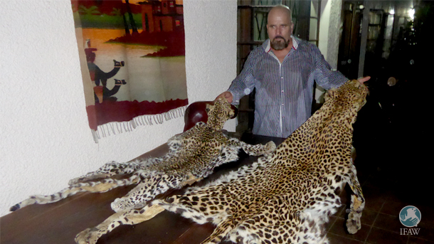 Mike Labuschagne with two leopard skins recently seized by the Wildlife Crimes Investigations Unit.