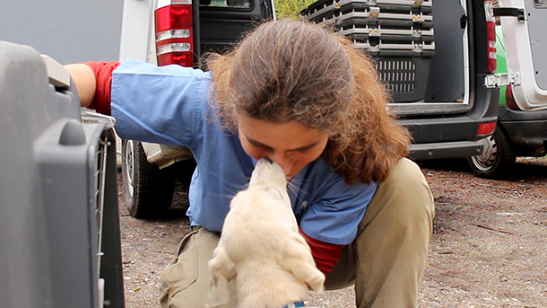 Veterinarian Kati Loeffler with dogs about to be loaded on the trucks.