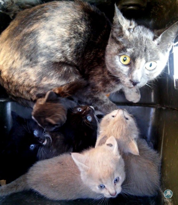 The mother of the kittens had given birth in an outside lean-to, and she was none too happy to see strange humans in her safe space.