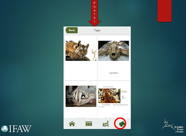 Once a species is chosen, a user can view photos of products derived from that species.