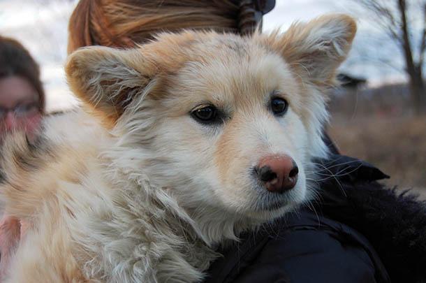 Ein Ziel des Northern Dogs-Projekts ist, den Menschen in den abgelegenen Gemeinden Nordkanadas zu zeigen, wie sie richtig mit ihren Hunden umgehen.