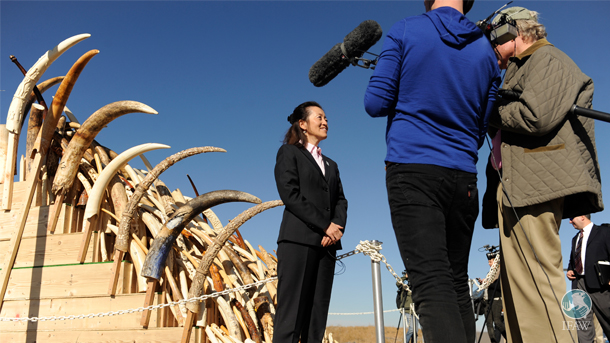 The author in front of a cache of tusks in Denver in a file photo from 2013.