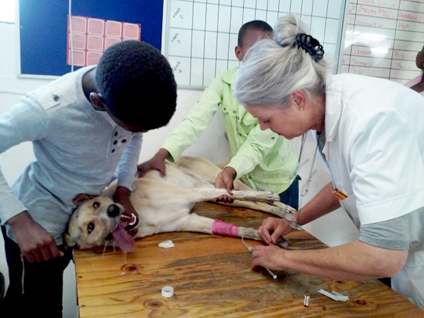 Mdzananda's veterinary nurse, Ros Stone, works against time to save the life of Fluffy, a poisoned dog. PHOTO: © Marcelle du Plessis