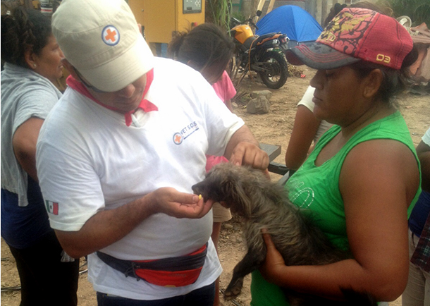 While preparing for the crisis, we built and consolidated a nationwide network of animal welfare organizations .