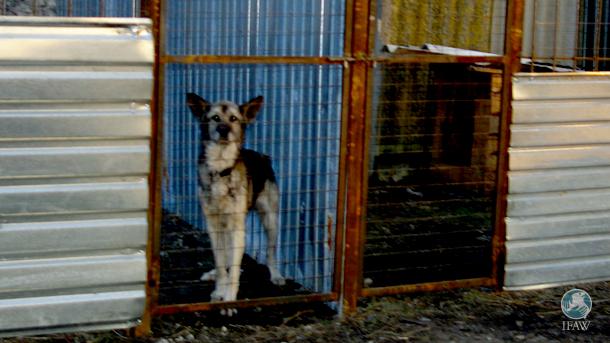 300 chiens ont été déplacés d'un refuge menacé par les bombes vers un refuge sûr à Horlivka, en Ukraine (cf. photo).